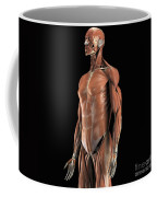 The Muscles Of The Upper Body Coffee Mug