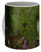 Tropical Fish And Coral Coffee Mug