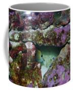 Tropical Fish In Cave Coffee Mug