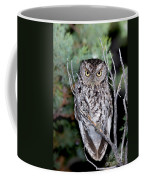 Whiskered Screech Owl Coffee Mug
