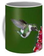 White-bellied Woodstar Coffee Mug