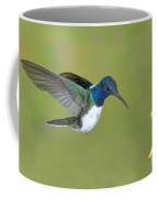 White-necked Jacobin Coffee Mug