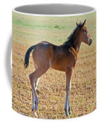 Wild Horse Foal Coffee Mug