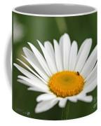 Wildflower Named Oxeye Daisy Coffee Mug