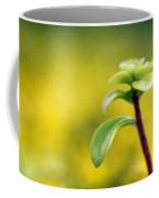 Yellow Sedum Coffee Mug