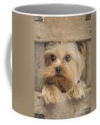 Yorkshire Terrier Dog Coffee Mug