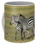 Zebra Males Fighting Coffee Mug