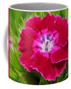 Sweet William From The Super Duplex Bluepoint Mix Coffee Mug