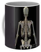 Bones Of The Upper Body Coffee Mug