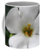 Bacopa Named Snowtopia Coffee Mug