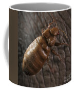 Bedbug Cimex Lectularius Coffee Mug