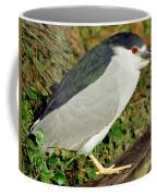 Black-crowned Night-heron Coffee Mug