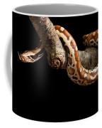 Blood Python Python Brongersmai Coffee Mug