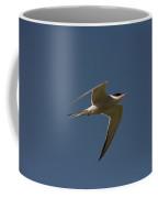 Common Tern, Sterna Hirundo, On Eastern Coffee Mug