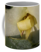 Dwarf Canna Lily Named Ermine Coffee Mug by J McCombie