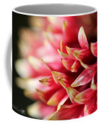 Gaillardia Pulchella Named Sundance Bicolor Coffee Mug