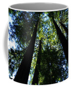 Giant Redwoods Coffee Mug