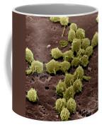 Macrophages On The Surface Coffee Mug
