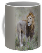 Male Lion Coffee Mug