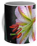 Oriental Lily Hybrid Named Mojave Coffee Mug