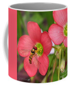 Oxalis Deppei Named Iron Cross Coffee Mug