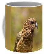 Portrait Of Nz Alpine Parrot Kea Nestor Notabilis Coffee Mug