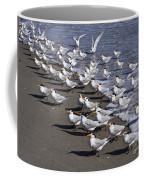 Royal Terns On The Beach At Indialantic In Florida Coffee Mug