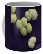 Sem Of Klebsiella Pneumoniae Coffee Mug