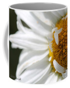 Shasta Daisy Named Paladin Coffee Mug