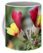 Snapdragon Named Floral Showers Red And Yellow Bicolour Coffee Mug