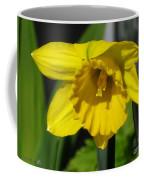 Trumpet Daffodil Named Exception Coffee Mug