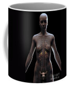 Urinary System Female Coffee Mug