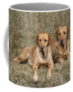 Yellow Labrador Retrievers Coffee Mug