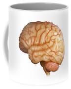Human Brain Coffee Mug