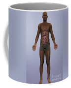 Human Anatomy Coffee Mug
