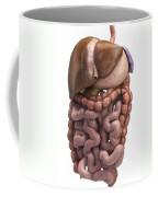 The Digestive System Coffee Mug