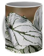 Caladium Named White Christmas Coffee Mug