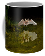 California Leaf-nosed Bat At Pond Coffee Mug