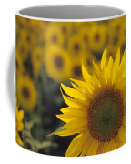Close-up Of Sunflowers In A Field Coffee Mug