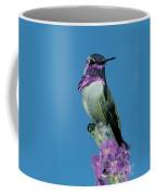 Costas Hummingbird Coffee Mug