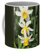 Cyclamineus Daffodil Named Jack Snipe Coffee Mug