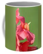 Dwarf Canna Lily Named Shining Pink Coffee Mug by J McCombie