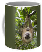 Hoffmanns Two-toed Sloth And Old Baby Coffee Mug by Suzi Eszterhas