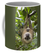 Hoffmanns Two-toed Sloth And Old Baby Coffee Mug