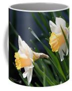 Large-cupped Daffodil Named Mrs. R.o. Backhouse Coffee Mug