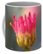 Marguerite Daisy Named Summer Song Rose Coffee Mug
