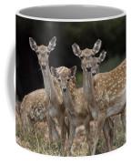 Mesopotamian Fallow Deer  Coffee Mug