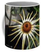 Osteospermum Named African Moon Coffee Mug