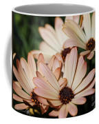 Osteospermum Named Sunadora Palermo Coffee Mug