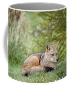 Patagonian Red Fox Coffee Mug